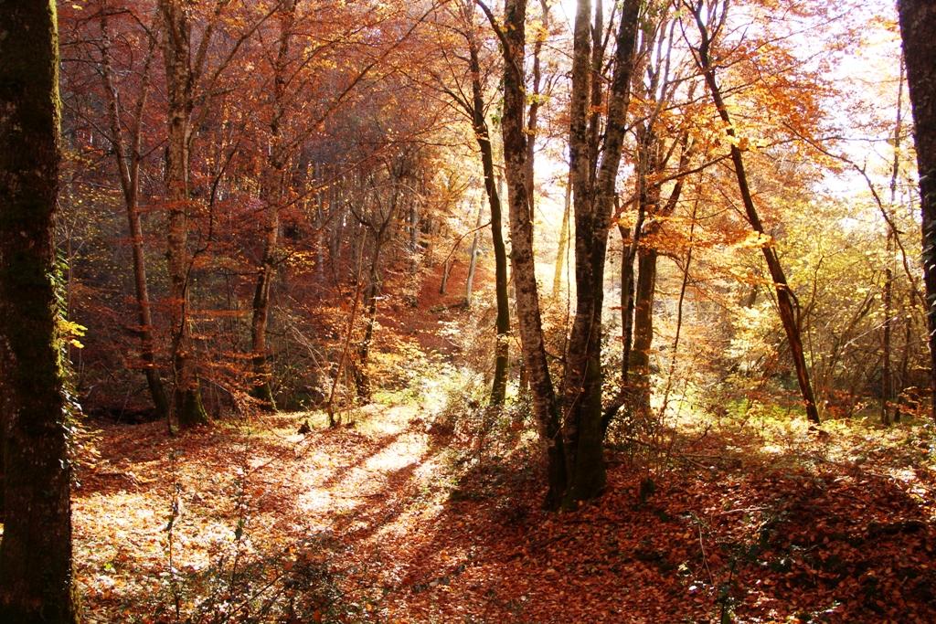 ____________________ Bois de Lascaux